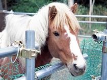 【ミニミニ牧場】動物たちにエサやり体験ができます