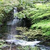 万葉公園川蝉の滝