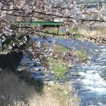 春の千歳川