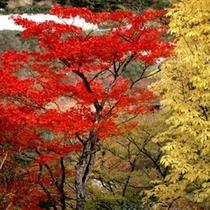 ■秋の西和賀紅葉
