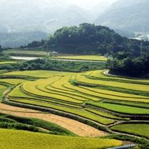 【淡路の棚田】 今も淡路島の山間部では山の傾斜を利用した棚田での稲作が盛ん
