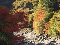かわらび川の紅葉
