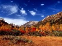 絵画のような紅葉姿の「栂池自然園」