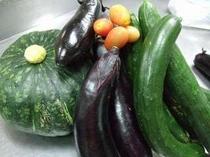 おばあちゃんの畑で採れた【夏野菜】