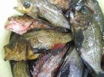 今日も「浜栄丸」は大漁です。