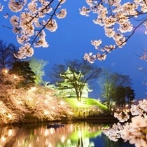 高田の夜桜