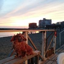 ビーチサイド浜茶屋