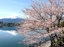日本の旬 春の富士山