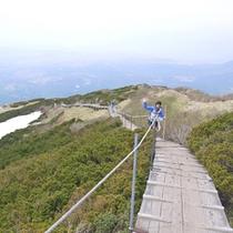 大山(頂上付近)