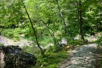 ホテリ・アアルト敷地内の自然