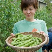 生でも食べれるエンドウ豆