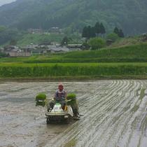山村の田植え風景