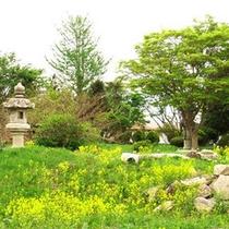 自然豊かなお庭