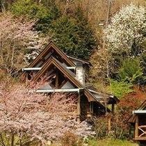 桜+外観1
