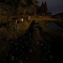 キレイな水源の田の原川沿いでは6〜7月ホタル鑑賞が楽しめます。