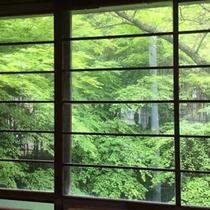 大広間から見れる新緑