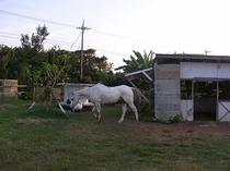 隣接するカトル牧場の風景