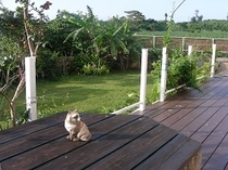 ウッドデッキと庭