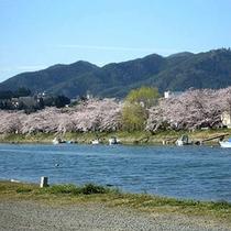 ■春の大川(桜)