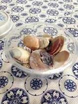 お土産に貝殻を