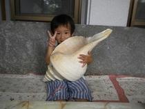 世界一大きい巻貝