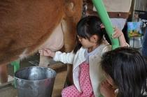 りんどう湖 乳搾り体験