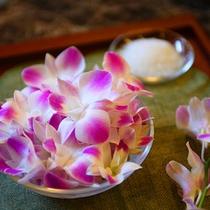デンファレの花