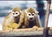 那須ワールドモンキーパーク☆お猿さんと直接触れ合うことができます。