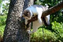 看板猫見習いほたる