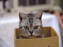 箱が大好きなの!