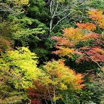 耶馬渓(やばけい)の紅葉