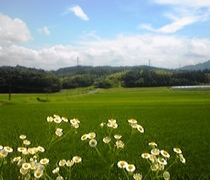 伊賀米コシヒカリの水田風景