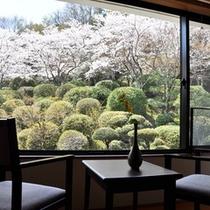 桜の季節。お部屋から庭園を望む