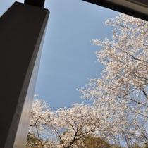 花見露天は最高!