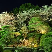 ライトアップされ浮かび上がる庭園