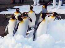 マリンパークのペンギン