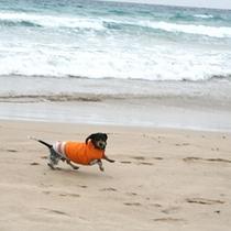 白浜海岸にて看板犬満喫中です。
