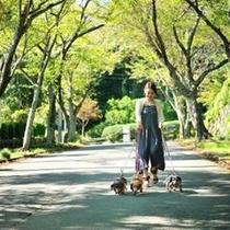わんこと散歩