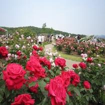 香りのばら園