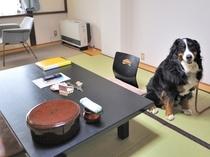 ペット同伴専用和室