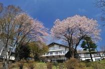 桜と大平ホテル-1