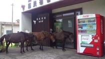 玄関に野生馬