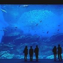 仙台うみの杜水族館(大水槽)