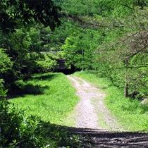 自然いっぱいの八ヶ岳・清里高原で散策してみては?