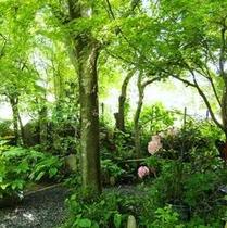庭園からのアプローチ