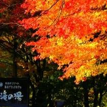 蓼科高原リゾートの紅葉