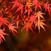 自然豊かな丹後を彩る紅葉の山々