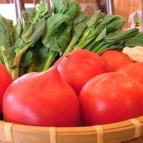 【トマト】*新鮮野菜