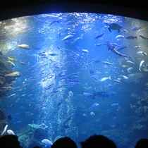 【京都水族館】「水と共につながる、いのち。」をコンセプトに人気の水族館。