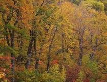 高原に遊ぶ妙高秋色